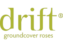 Drift® Groundcover Roses