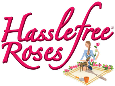 Hasslefree® Roses