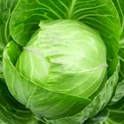 'Savoy' Cabbage